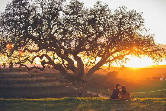 San Luis Obispo County, CA: Catching sunset at Paso Robles Vineyard