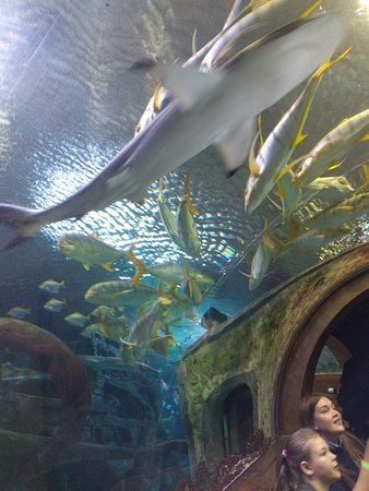 Voronezh Oceanarium (ru) : ... - Picture of Voronezh Oceanarium, Voronezh Oblast - TripAdvisor
