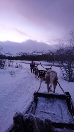 North Adventure AS: Reindeer sledding