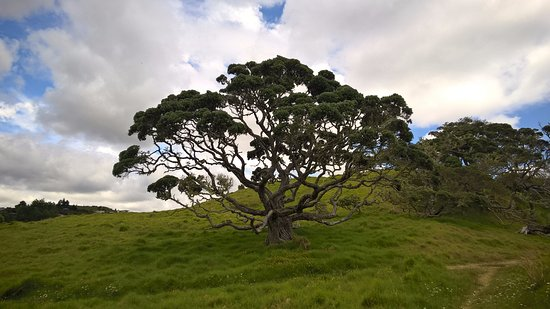 Mangonui, Nya Zeeland: Taumarumaru Scenic Reserve Walk