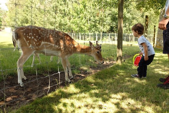 Lilliput Farm Fun And Animal Park