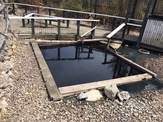 Waiariki Pools (Ngawha Springs Hot Pool): The Doctor Pool at Ngawha Springs