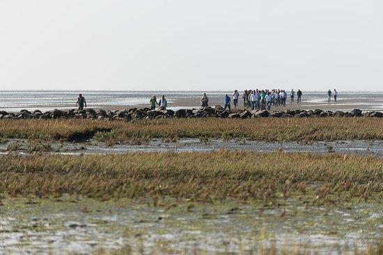 West-Terschelling, Países Bajos: Wadlopen onder Terschelling tijdens een zakelijk event