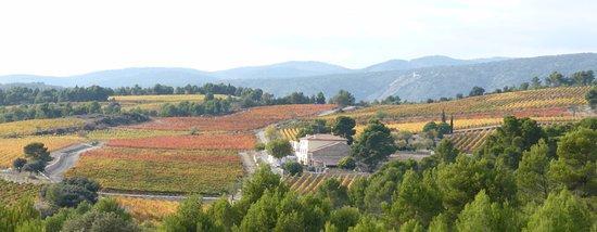 La Liviniere, Frankreich: le château Sainte Eulalie dans son écrin de vignes