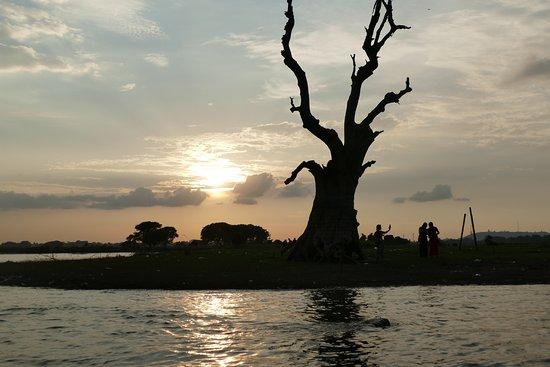 Puente U Bein: Tree in wet lands