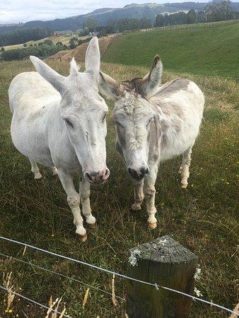 Doolan's Country Retreat: Ricky & Shania