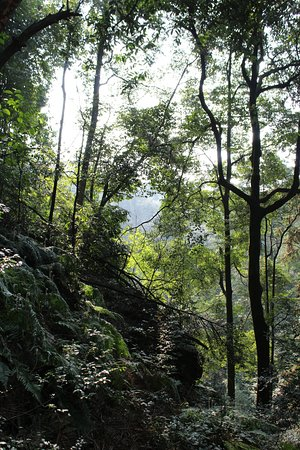 Jinyun Mountain Natural Reserve: Forest