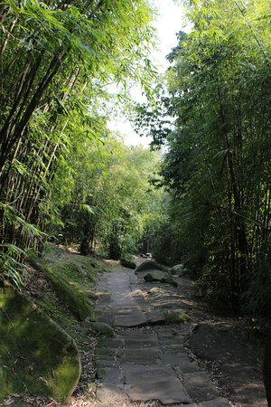 Jinyun Mountain Natural Reserve: The bamboo forest