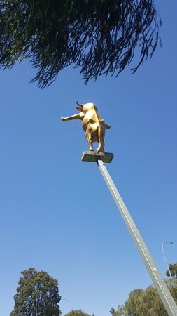 Albany, Australien: Golden Cow statue in the park!