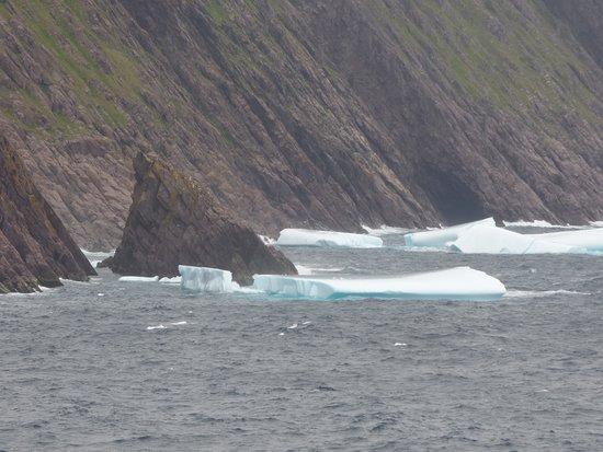 Foto de Newfoundland