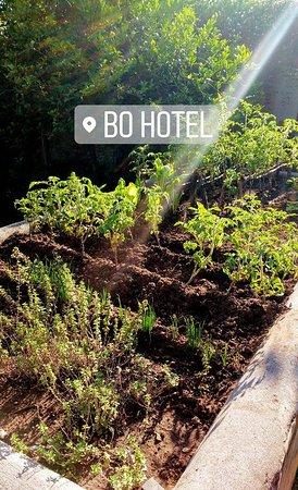 Bo Hotel de Encanto & Spa: la huerta aromatica