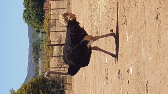 Highgate Ostrich Show Farm: 20170117_114416_large.jpg