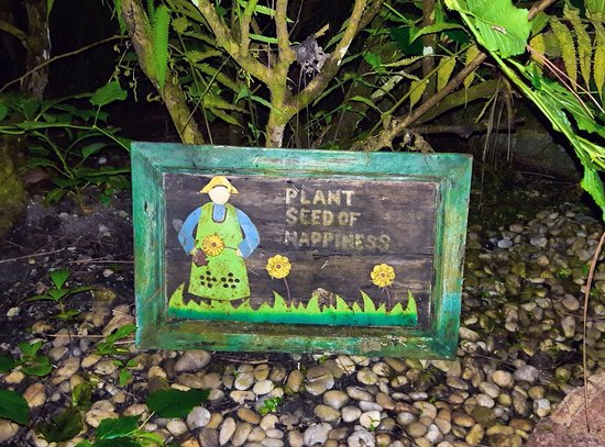 Cerro Azul, Panama : Part of the Garden