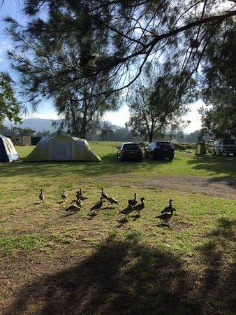 Glenmack Park: ducks walking around the site