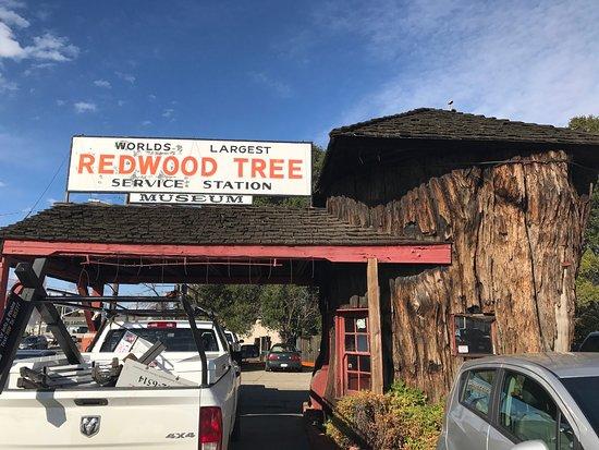 Ukiah, CA: World's Largest Redwood Station 2017