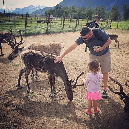 Reindeer Farm: Even our 2 year old loved the reindeer!