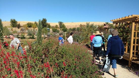 ปลาเซอร์วิลล์, แคลิฟอร์เนีย: Sherwood Demonstration Garden Tour