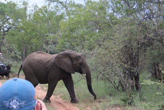 Shiduli Private Game Lodge: Safari fotografico