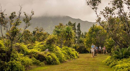 Kilauea, Hawái: Hawaiian Discovery
