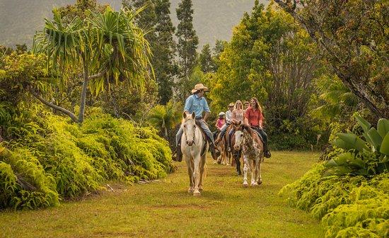 Kilauea, Hawái: Tropical Trail Adventure
