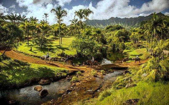 Kilauea, Hawái: 80 acres of botanical gardens