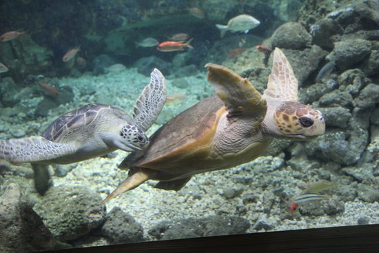 Tortues picture of aquarium de la guadeloupe le gosier for Aquarium tortue