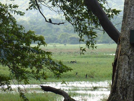 Habarana Village by Cinnamon: Wetlands bordering the property