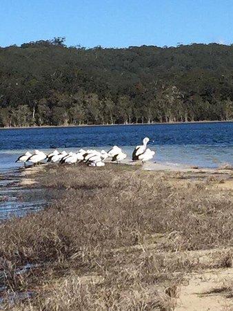Smiths Lake, Australië: photo2.jpg