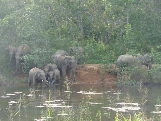 Prachuap Khiri Khan Province, Thailand: Elephants at play