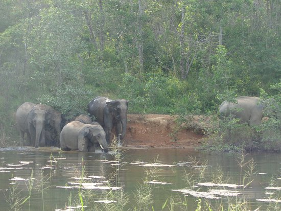 Provincie Prachuap Khiri Khan, Thailand: Elephants at play