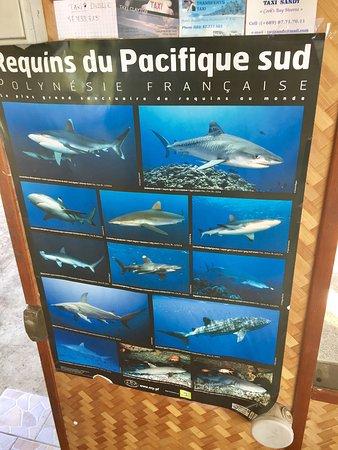 о.Муреа, Французская Полинезия: photo2.jpg