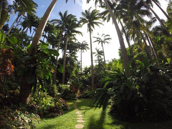 Hunte's Gardens: Hunte's GaHunte's Gardenrden