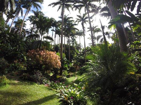 Hunte's Gardens: Hunte's Garden
