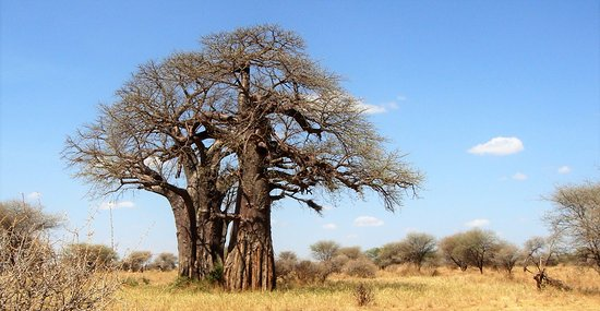 Tumbatu is known as a mysterious island in East Africa used