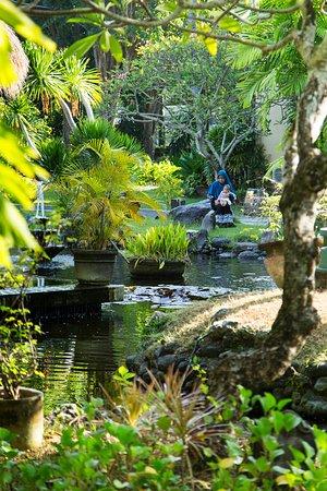 The Patra Bali Resort & Villas: Ponds surrounding the Floating Lounge