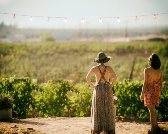 Archanes, Греция: Sinadinakis Winery Vineyards