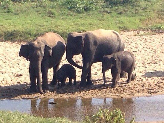 Kaduwela, Sri Lanka: photo2.jpg