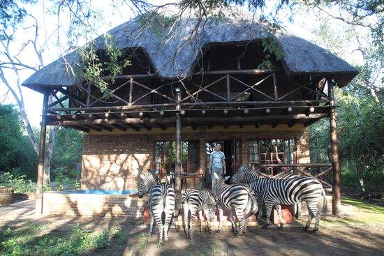 Marloth Park, Republika Południowej Afryki: Zebra at Rafiki's Resthouse