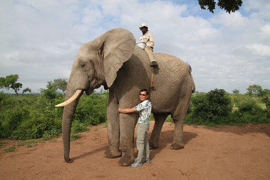 Marloth Park, Republika Południowej Afryki: Hugging an African elephant in Elephant Sanctuary, Hazyview Kruger Park