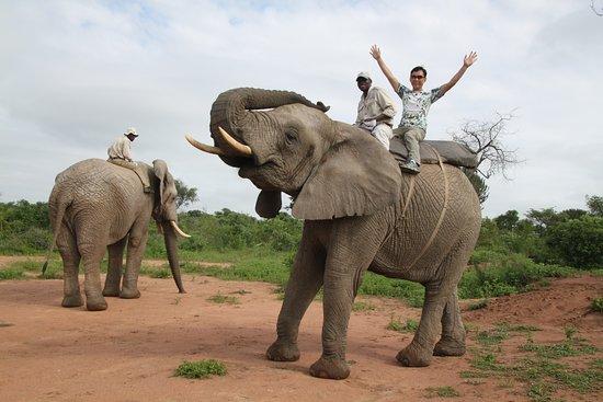 Marloth Park, Republika Południowej Afryki: Wonderful elephant ride at Elephant Sanctuary, Hazyview Kruger Park