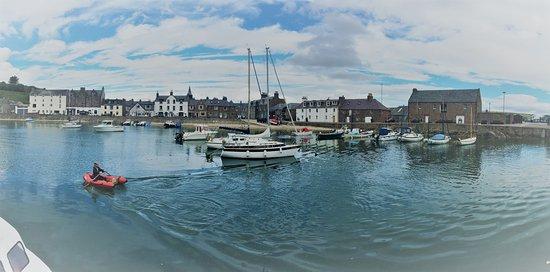 Stonehaven, UK: Harbour
