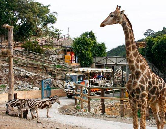 Selwo Aventura: Safari Serengueti