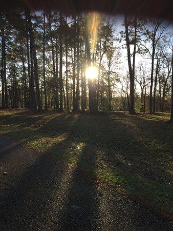 Sam Houston Jones State Park Photo
