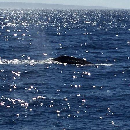 Maalaea, Hawaje: photo1.jpg
