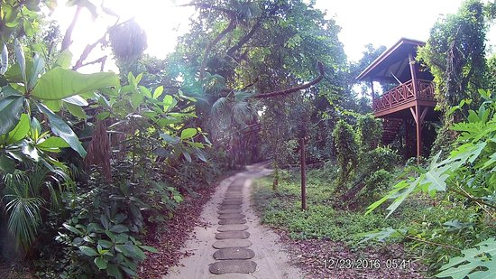 Hamanasi Adventure and Dive Resort: Trail to Treehouse rooms