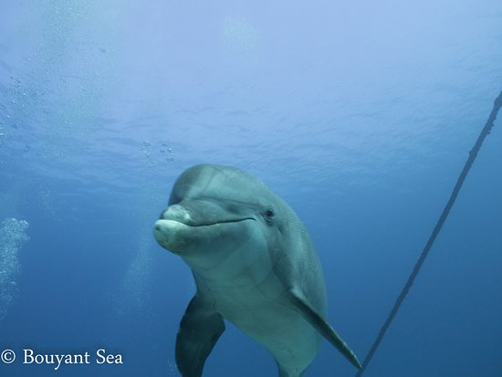 Anthony's Key Resort: Dolphin dive experience