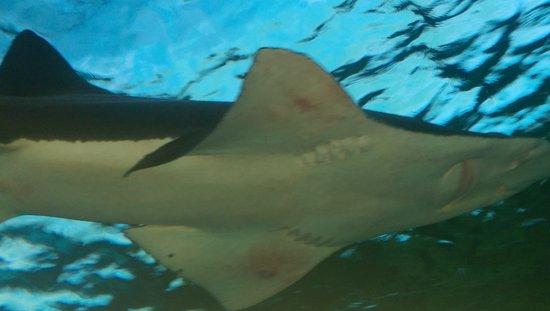 Ripley's Aquarium: IMAG0545_large.jpg