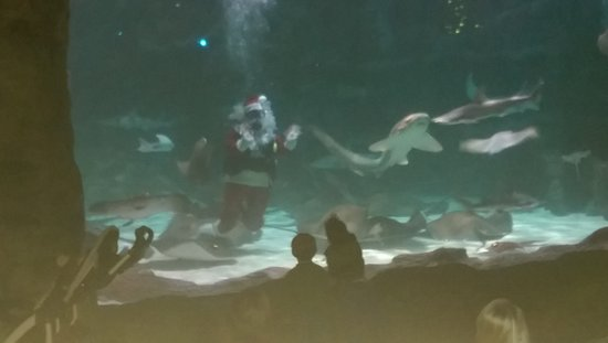 Ripley's Aquarium: IMAG0548_large.jpg