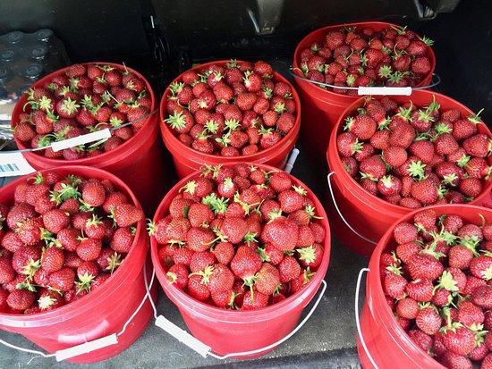 Mayville, NY: Local picked strawberries