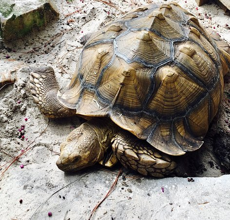 Tibet-Butler Preserve: I didn't see anything exciting in the animal department but did see a cool large tortoise and pl